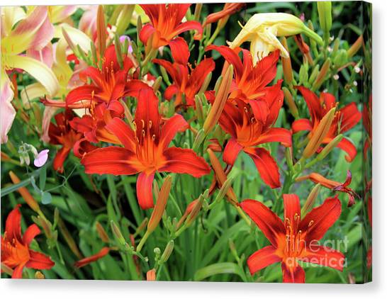 Red Daylilies Canvas Print