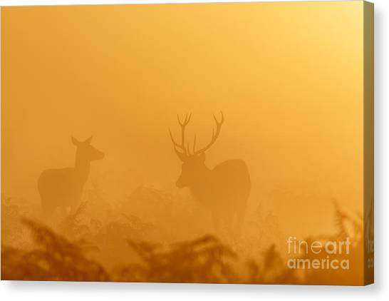 Red Deer At Sunrise Canvas Print
