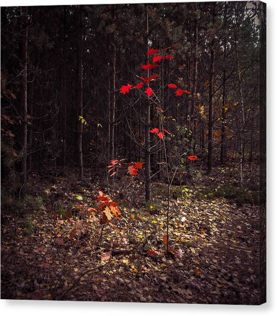 Red Drops Canvas Print