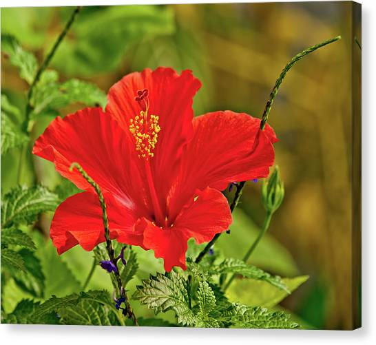 Red Elegance Canvas Print