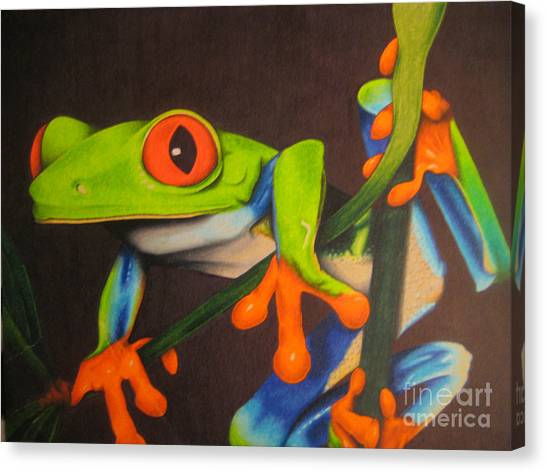 Red Eye Tree Frog Canvas Print by Brian Schuster