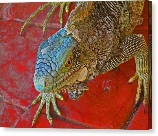 Red Eyed Iguana Photo Canvas Print by Kelly     ZumBerge