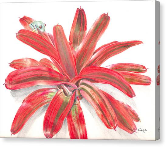 Red-eyed Tree Frog On Bromeliad Canvas Print