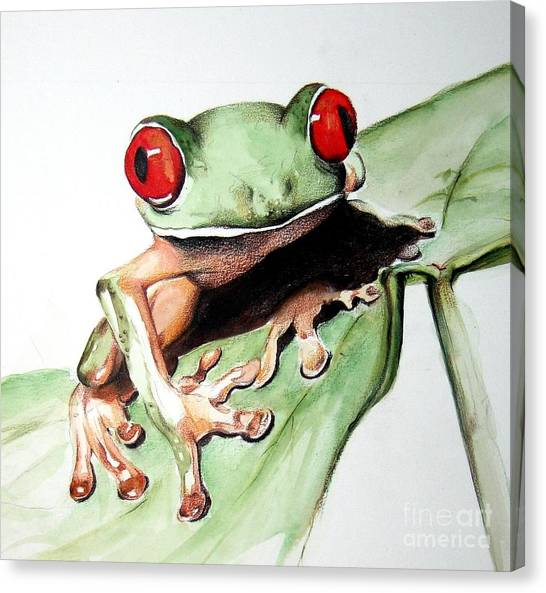 Frogs Canvas Print - Red Eyes by Ilaria Andreucci