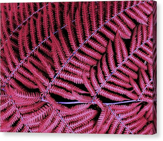 Red Fern Canvas Print
