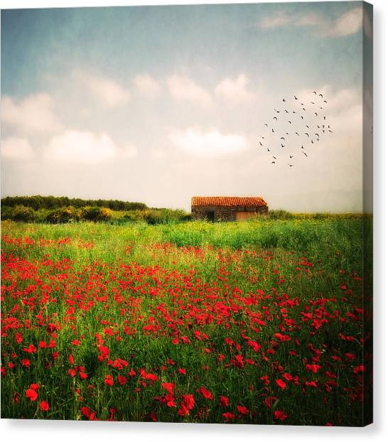 Red Field Canvas Print