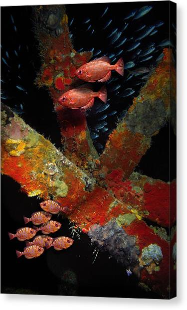 Red Fish On The Rhone Canvas Print