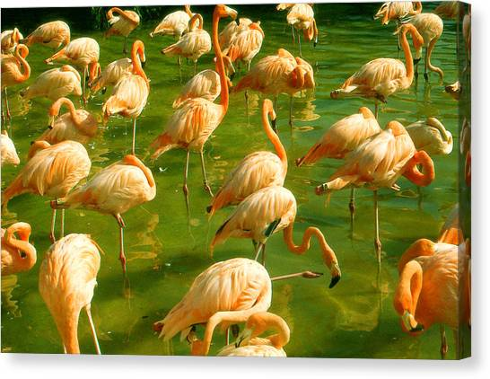 Red Florida Flamingos In Green Water Canvas Print