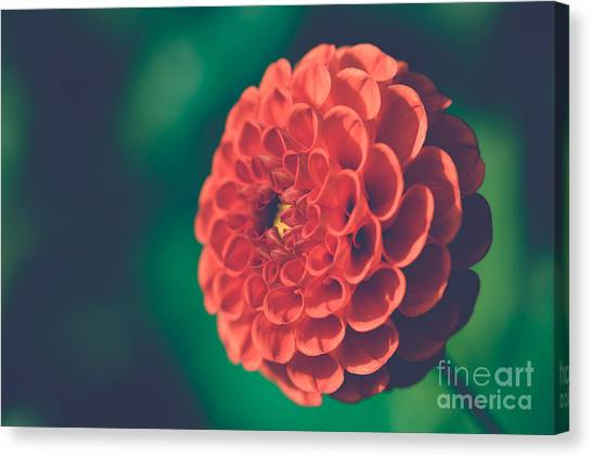 Red Flower Against Greenery Canvas Print