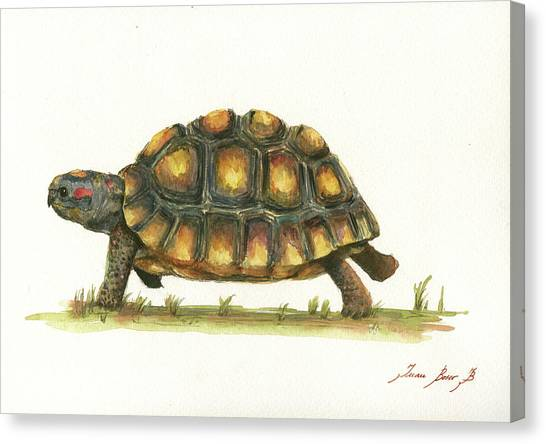 Tortoises Canvas Print - Red Footed Tortoise  by Juan Bosco