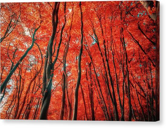 Red Forest Of Sunlight Canvas Print