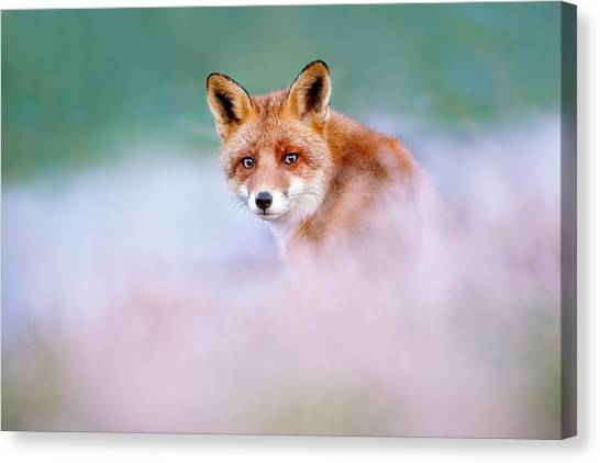 Foxes Canvas Print - Red Fox In A Mysterious World by Roeselien Raimond