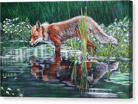 Red Fox Reflecting Canvas Print