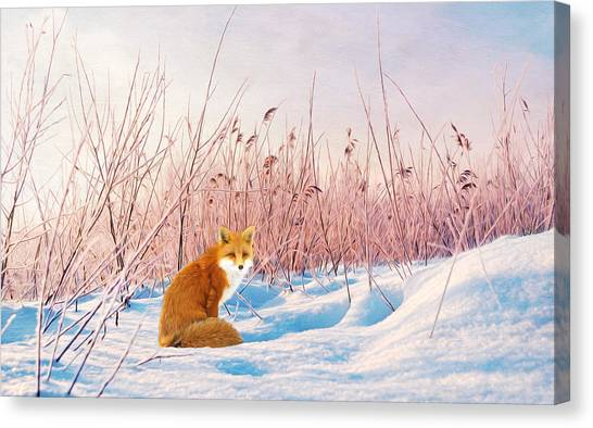 Small Mammals Canvas Print - Red Fox In Snow by Laura D Young
