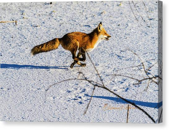 Canvas Print featuring the photograph Red Fox On The Run by Edward Peterson