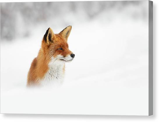 Winter Storm Canvas Print - Red Fox Out Of The Blue by Roeselien Raimond