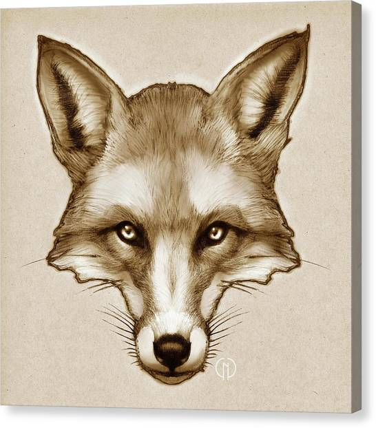 Woodland Canvas Print - Red Fox Sketch by Catherine Noel