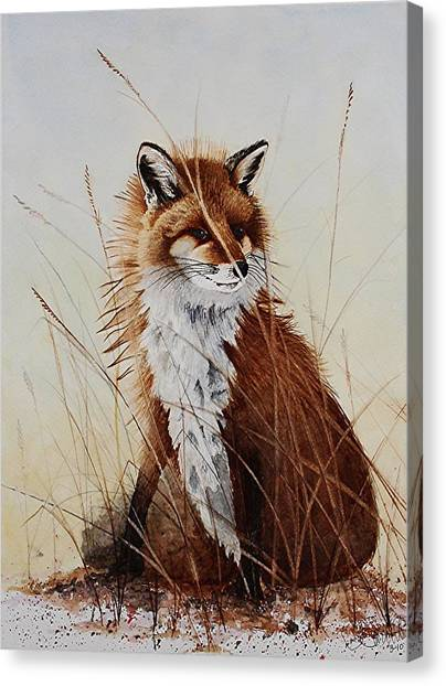 Red Fox Waiting On Breakfast Canvas Print