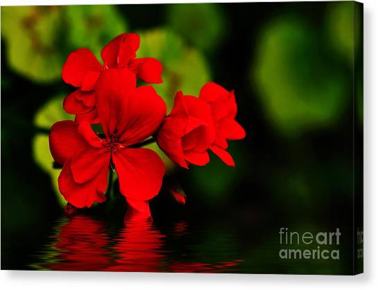 Red Geranium On Water Canvas Print