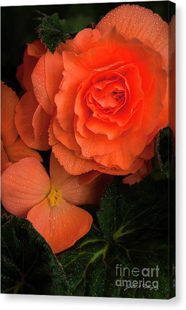 Red Giant Begonia Ruffle Form Canvas Print