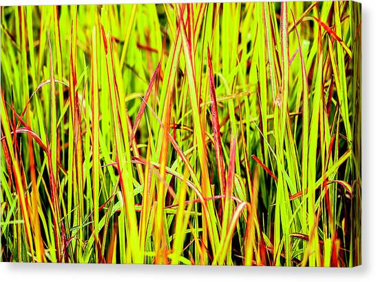 Red Green And Yellow Grass Canvas Print