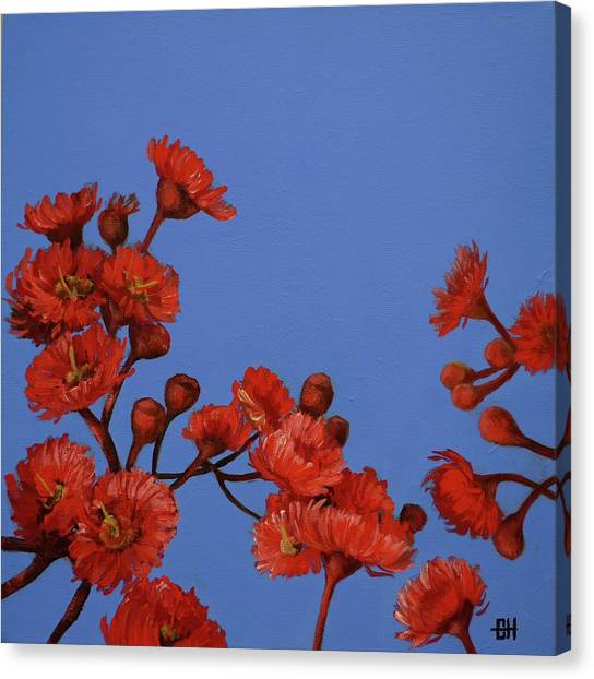 Red Gum Blossoms Canvas Print
