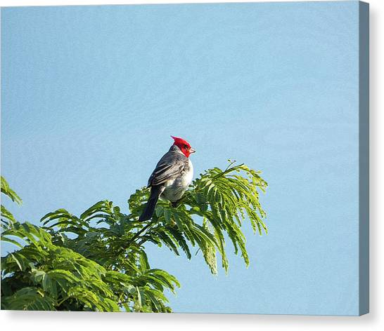 Red-headed Cardinal On A Branch Canvas Print