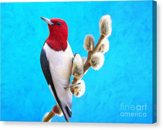 Woodpeckers Canvas Print - Red Headed Woodpecker by Laura D Young