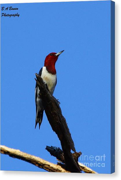 Red Headed Woodpecker On A Snag Canvas Print