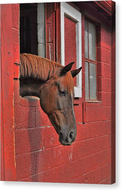 Red Horse Canvas Print by JAMART Photography