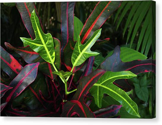 Red Hot And Green Canvas Print