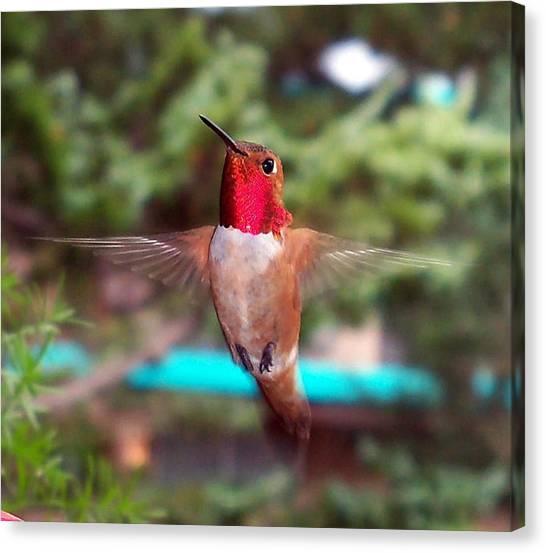 Red Hummingbird Canvas Print