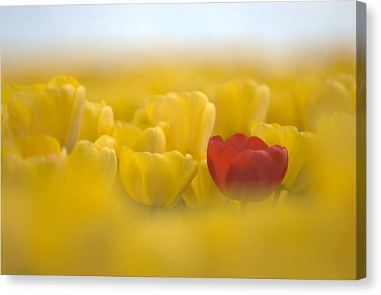 Red In Yellow L085 Canvas Print by Yoshiki Nakamura
