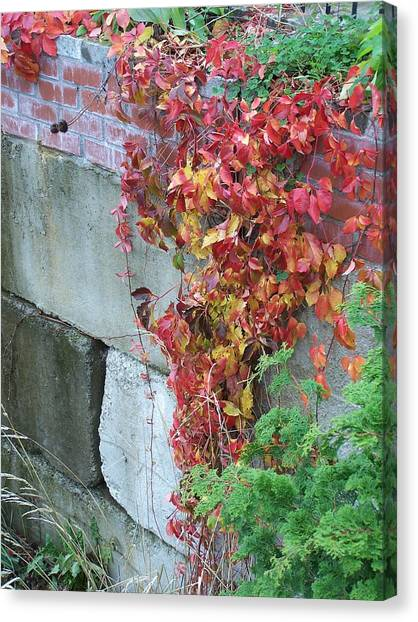 Red Ivy Canvas Print by Gene Ritchhart