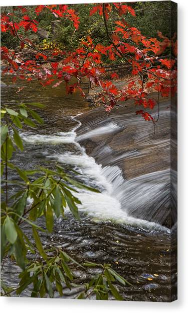 Red Leaf Falls Canvas Print