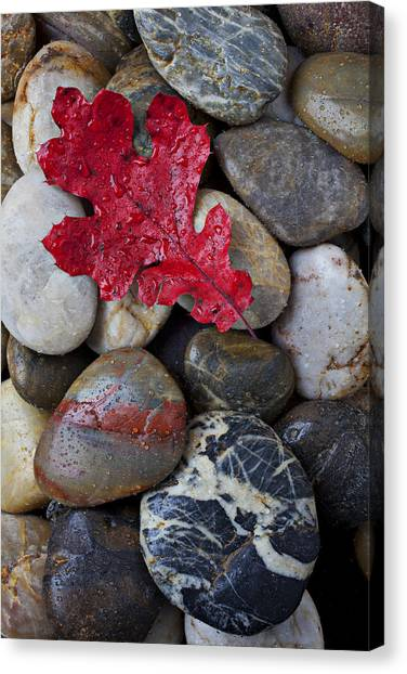 Red Rock Canvas Print - Red Leaf Wet Stones by Garry Gay