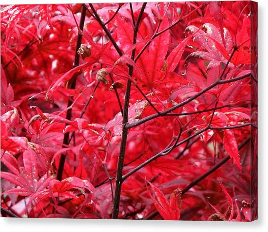Red Leaves And Stems 2 Pd Canvas Print by Lyle Crump