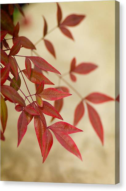 Red Leaves Canvas Print by Bob Coates