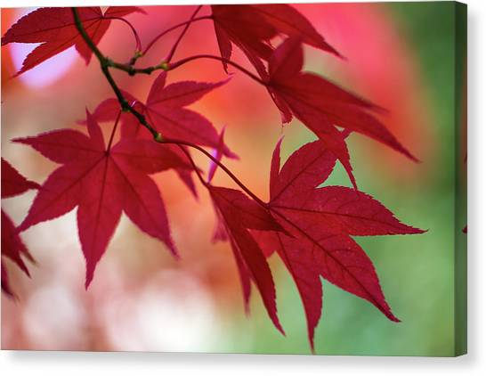 Canvas Print featuring the photograph Red Leaves by Clare Bambers