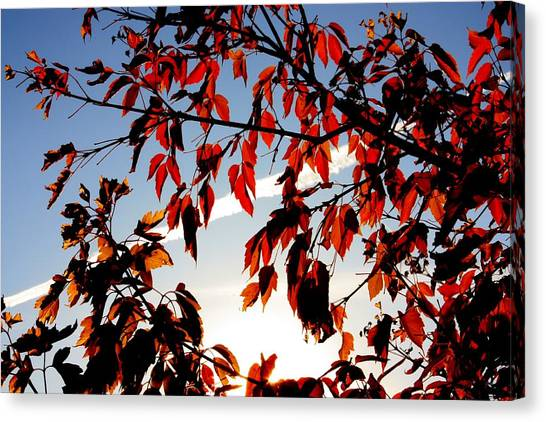 Red Leaves Part 1 Canvas Print by Joseph Peterson