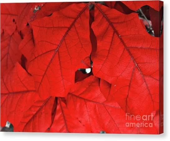 Red Leaves  Canvas Print by Rachel Hannah