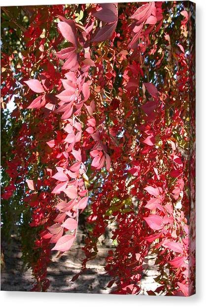 Red Leaves Canvas Print by Susan Boyes
