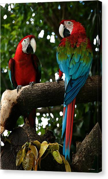 Red Macaws Canvas Print
