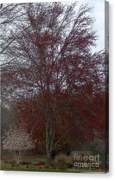 Red Maple Canvas Print by Emily Kelley