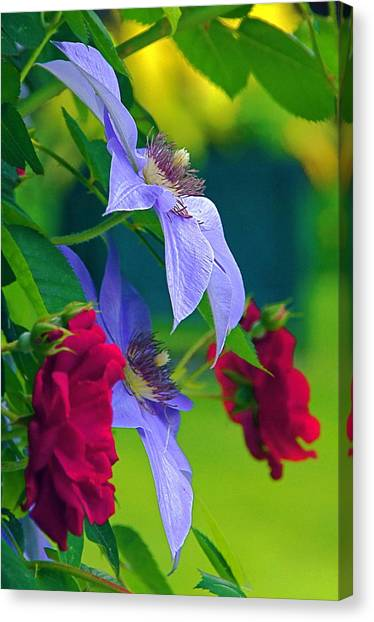 Red Meets Lavender Canvas Print