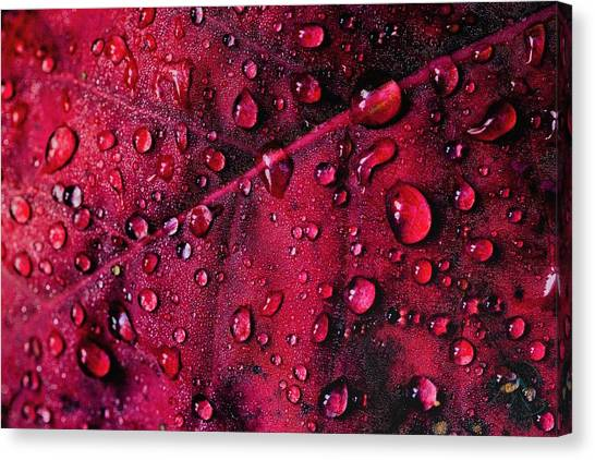 Canvas Print featuring the photograph Red Morning by Gene Garnace