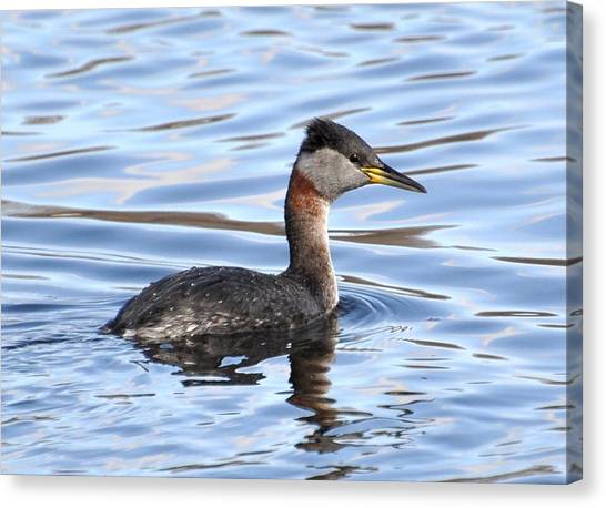 Red-necked Grebe Canvas Print