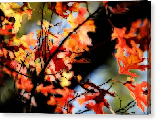 Red Oak Leaves In Fall Canvas Print by Linda Phelps