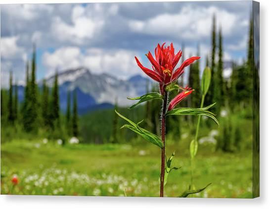 Red Paintbrush On Mount Revelstoke Canvas Print