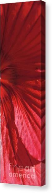 Canvas Print - Red Petals by Megan Cohen